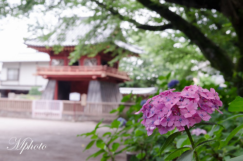 東京自由行 文化古蹟 川越 仙波東照宮 喜多院 500羅漢尊