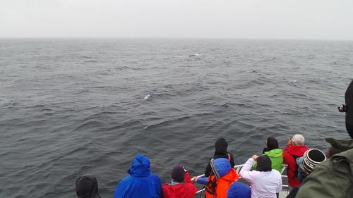 2013-0720 776 Andenes walvissafari