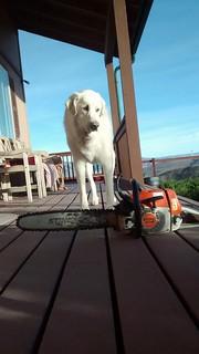 Mavis and chainsaw