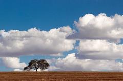 Alone Tree photo by f l a m a r i o n n u n e s