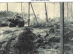 Provence- 1944 - RFM - Chars légers dans les pins- Source  Pierre Tropet conservateur du Memorial de Hyères