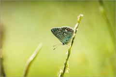 lost in green photo by Zino2009 (bob van den berg)