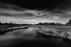 Dark Marsh photo by Suzanna Mars