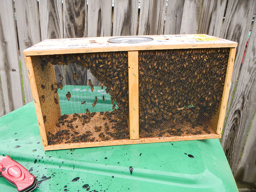 Hiving Honey Bees in Top Bar Hive