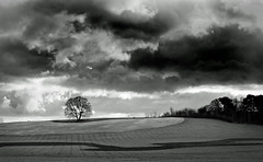 Lone tree - Explored thanks. photo by jimj0will - disabled by a change too many!