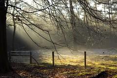 Magical sunbeams. photo by Wouter van Wijngaarden