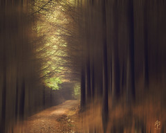 ...lost in a forest photo by fearghal breathnach