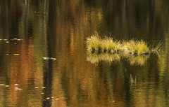 'Nessie in Autumn' photo by Canadapt