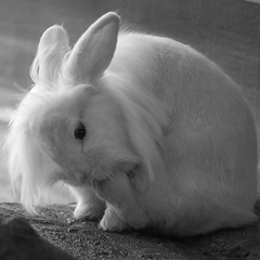 Rabbit [Explored 10/02/2014] photo by Ambra Marras