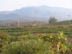 Birmanie - Iac Inlé