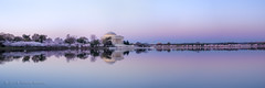 Cherry Blossom Peak Bloom Panorama 2014 photo by navinsarma