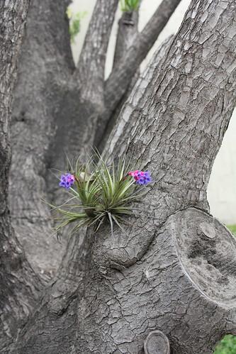 Pretty little purple flower on a tree