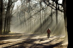 Cycling through a magical world of sun rays. photo by Wouter van Wijngaarden