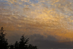 263 of 365 Sunset photo by linlaw39