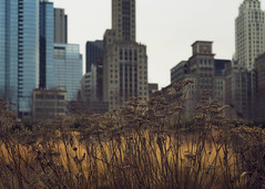 Chicago on the prairie photo by amy buxton
