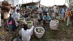 Daily life, Street Market, Agra आगरा, India भारत गणराज्य photo by Gaston Batistini (6 million+ views thanks to all !