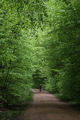 The forrest in May photo by Vibeke Sonntag