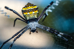 spider photo by MohdShareef