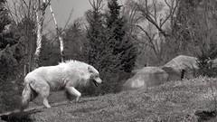 Toronto Zoo - April 10/14 (Explore May 17/14) photo by MorboKat