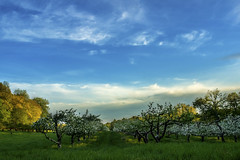 Rhinebeck Spring Orchard - Explore photo by yogagi