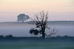 Misty morning photo by Nige H (1.6 million views. Thank you)