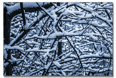 Snowy Branches photo by kellyhackney1