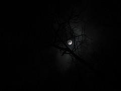 HAUNTED FULL MOON LIFE photo by srsyrus