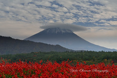 Red sage and Fuji photo by yoko.wannwannmaru