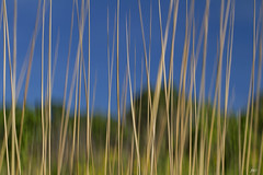 Tall Grass on the Prairie © - Day 145 of 365 photo by jeanne.marie.