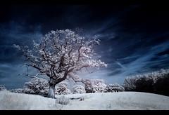 Spooky Tree photo by JasonPC