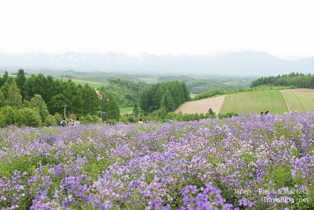 北海道 美瑛 四季彩之丘