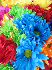 Bright Flowers photo by shaire productions