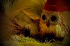 Owl's Nest photo by hoobgoobliin
