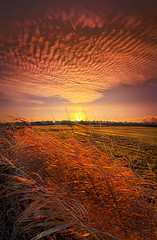 Memories of Whispered Thoughts photo by Phil~Koch