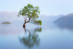 Bird In A Lone Willow Tree On Lake Wanaka (Explore #1) photo by glness