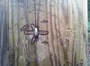 15805998539_0534dffeb0_t