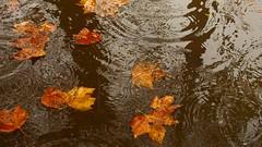 _C0A0235R Autumn  Landscape, Jon Perry - Enlightenshade, 23-11-14 zad_C0A5897R ,  (Explore #23, 23 November 2014) photo by Jon Perry - Enlightenshade