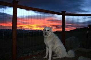 Mavis enjoying the sunset