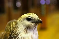 Oiseau de proie, Grande Galerie de l'Évolution, Muséum National d'Histoire Naturelle, Paris, France. photo by SETIANI LEON