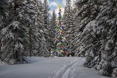 Walking in a Winter Wonderland photo by dbushue