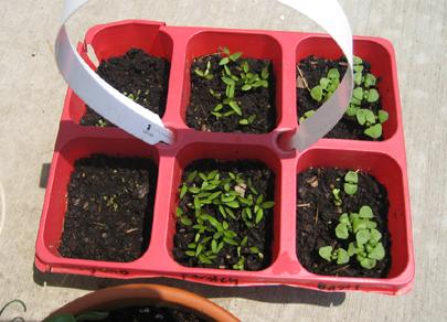 Herbs Week 02
