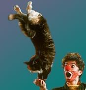 catcircus.jpg