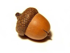 Appreciative intelligence helps leaders see the oak in the acorn