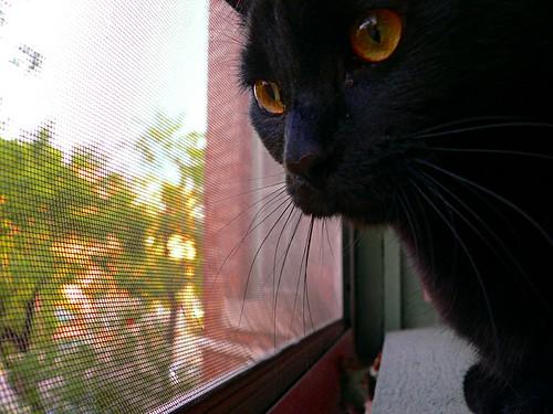 Oskar loves him some windowsill