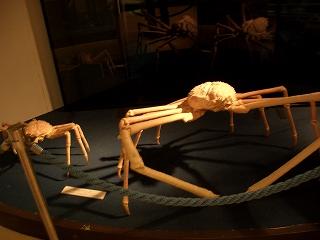 20060627 しおさい博物館 蟹