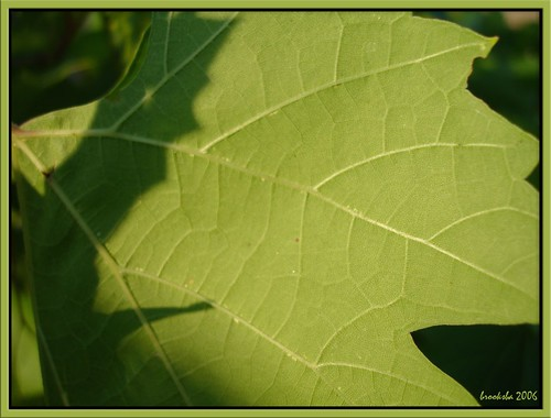 shadow on a grape leaf