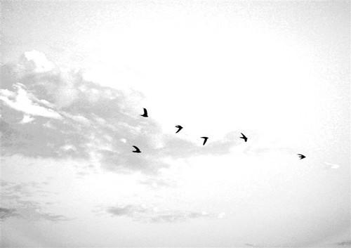 white sky with birds