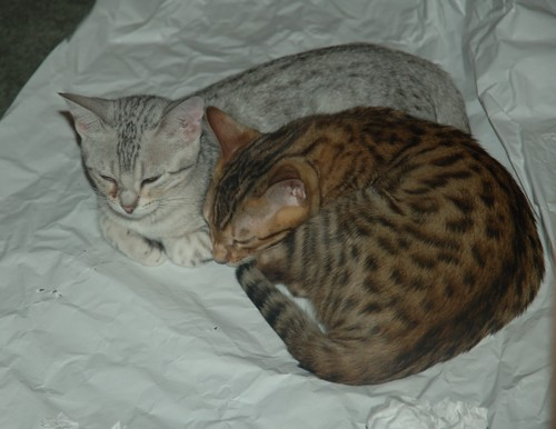 paper-sleep