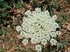 Fractal flower?