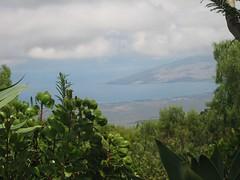 View, Lavender Farm
